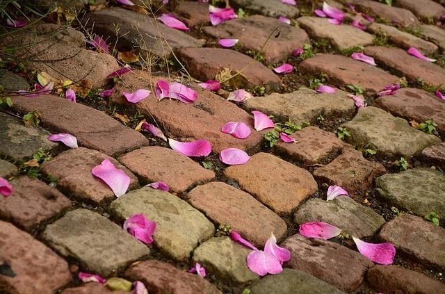 cobblestones with flower petals